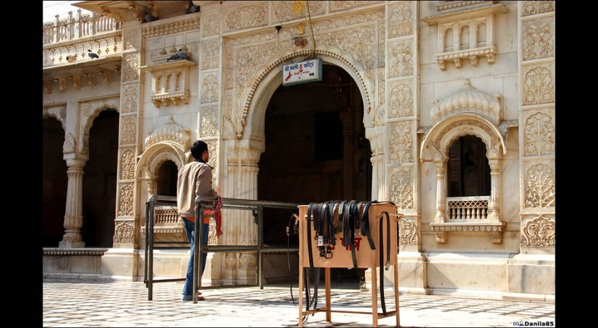 danila - rat temple Karni Mata