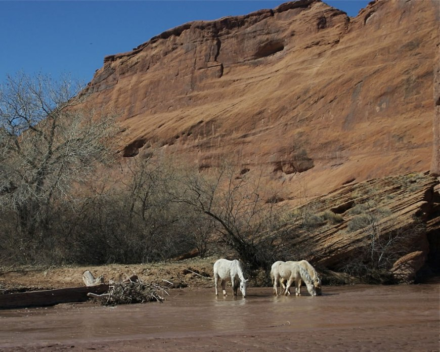 horses drinking from the wash in Canyon de Chelly