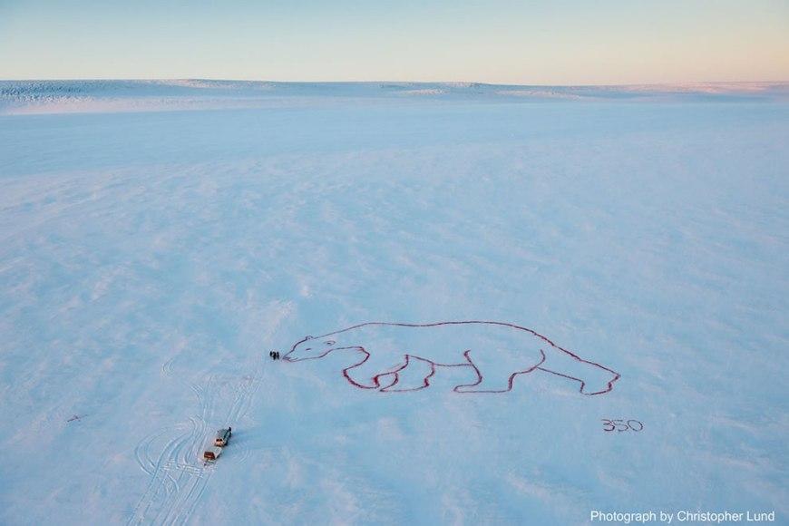 red polar bear
