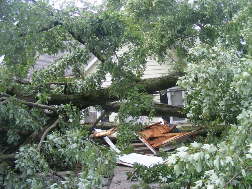 dead houses and trees - lady trapped in house after trees fall during night storm Boonville IN