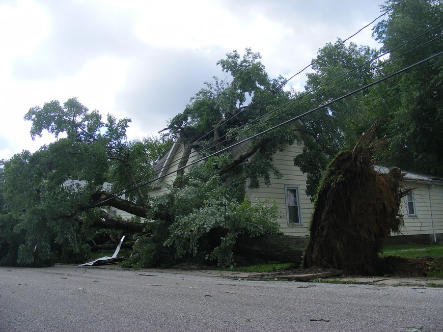 lines down, massive trees uprooted, storm may 25 southern indiana