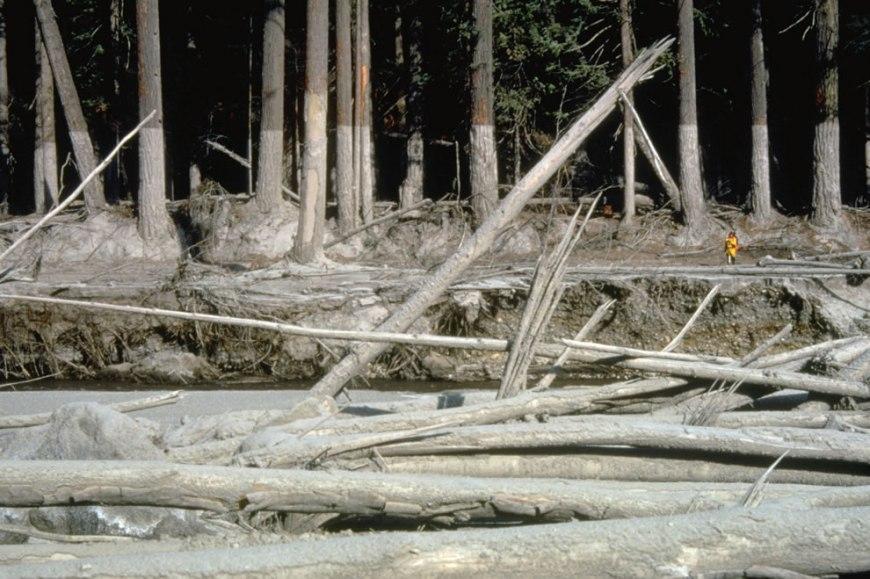 mudline left behind along muddy river AFTER eruption mt st  helens10-23-80