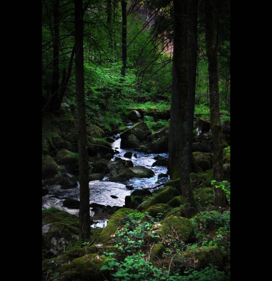 landscape of blackforest