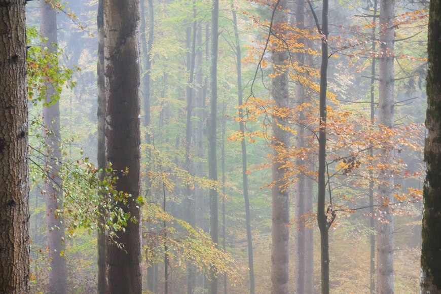 Pastel-Colored Forest