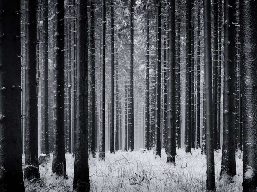 Schwarzwald 'absorb' the viewer into the forest