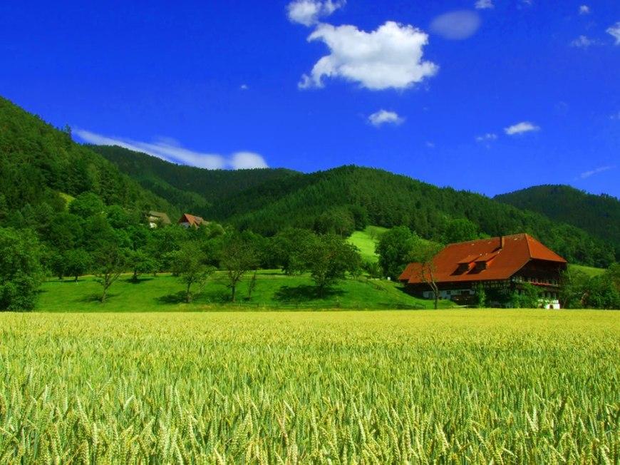 Summer Black Forest