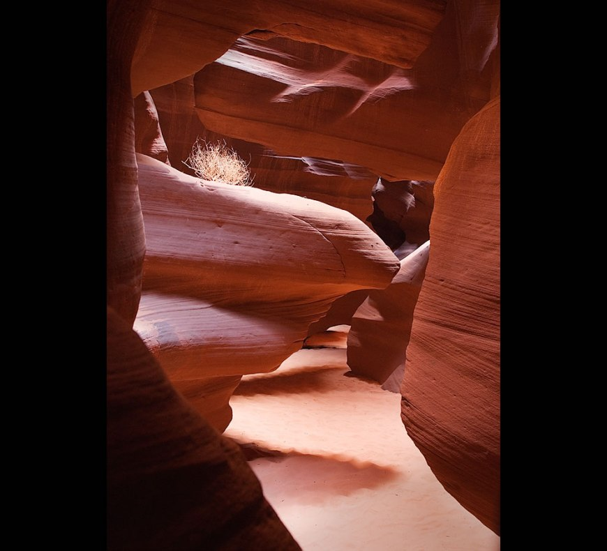 Tumbleweed in Antelope Canyon