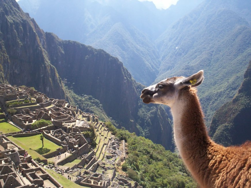 All creatures enjoy viewing the ruins of Machu Picchu