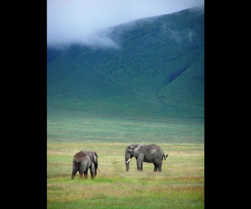 Elephants in Ngorongoro Crater