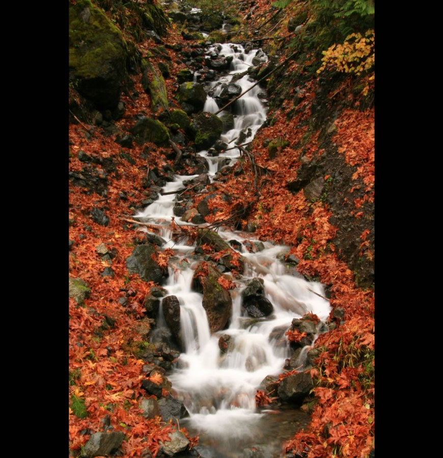 Fantastic Fall scene at Olympic National Park