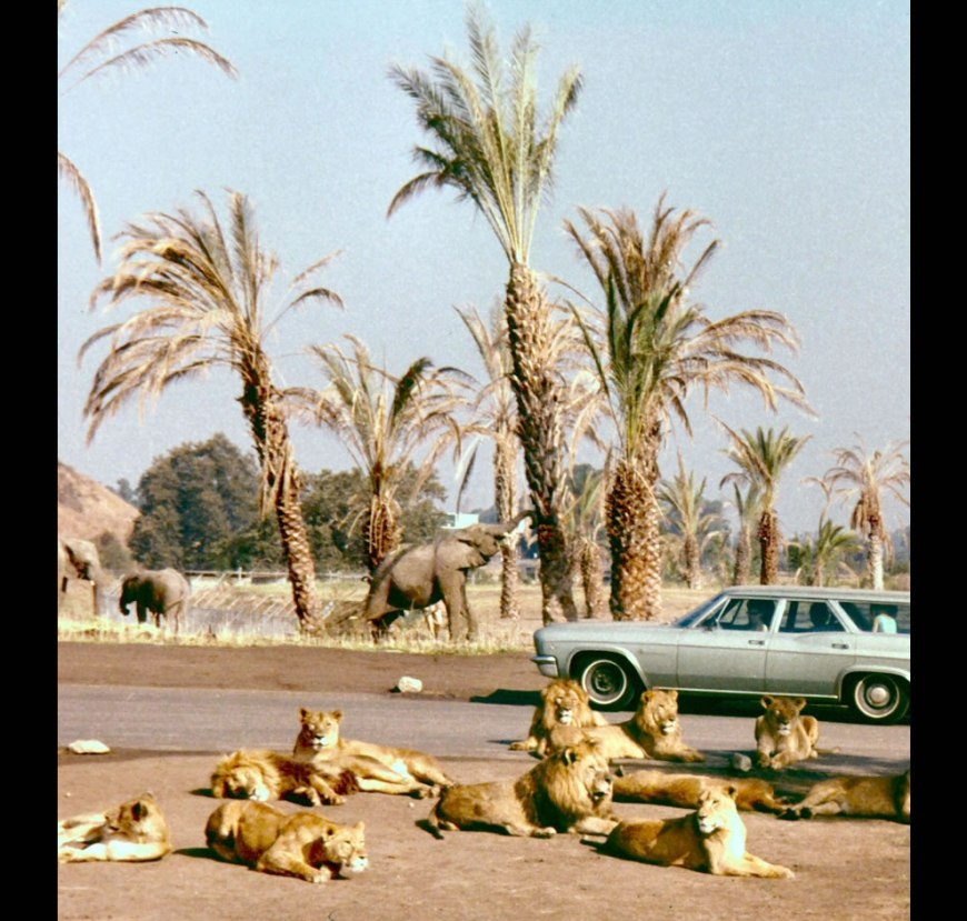 Lion Country Safari 1971