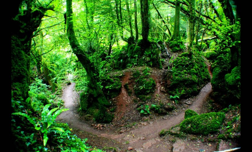 Amazing Greens at Puzzlewood, Forest of Dean in Gloucestershire