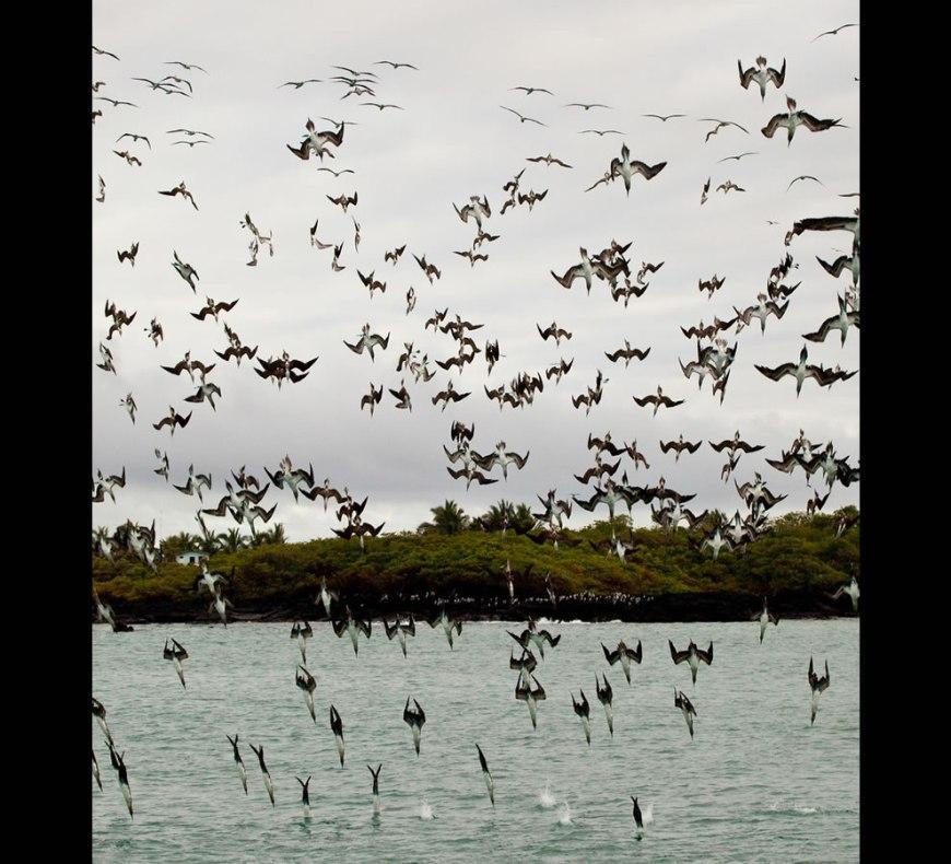 Galapagos - Puerto Villamil