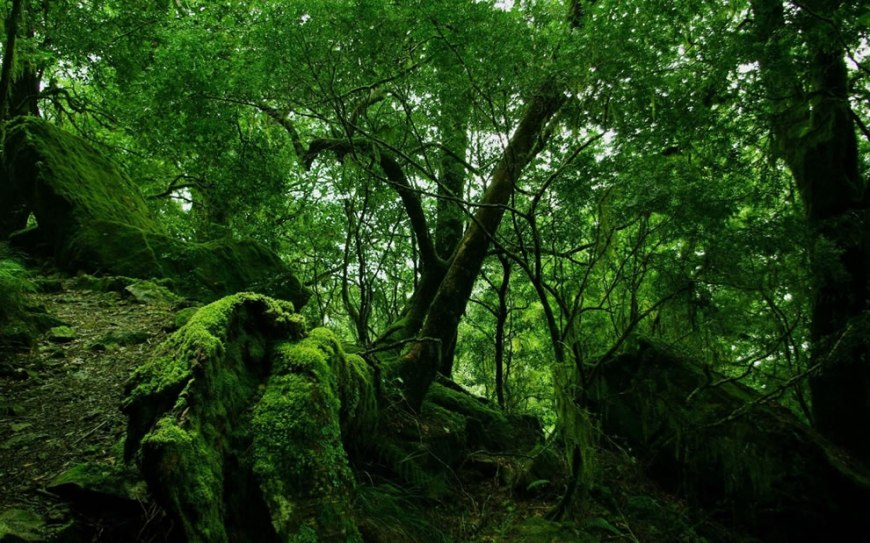 Magical Mystical Mossy Green Muse