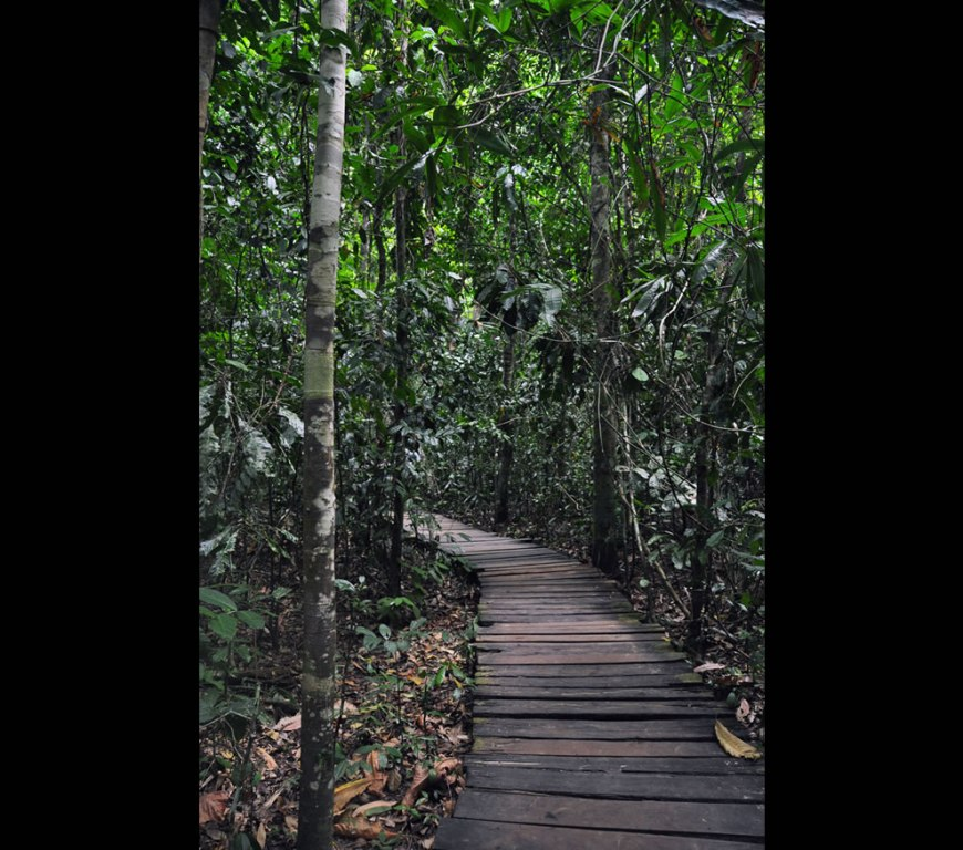 Palawan pathway to the underground river