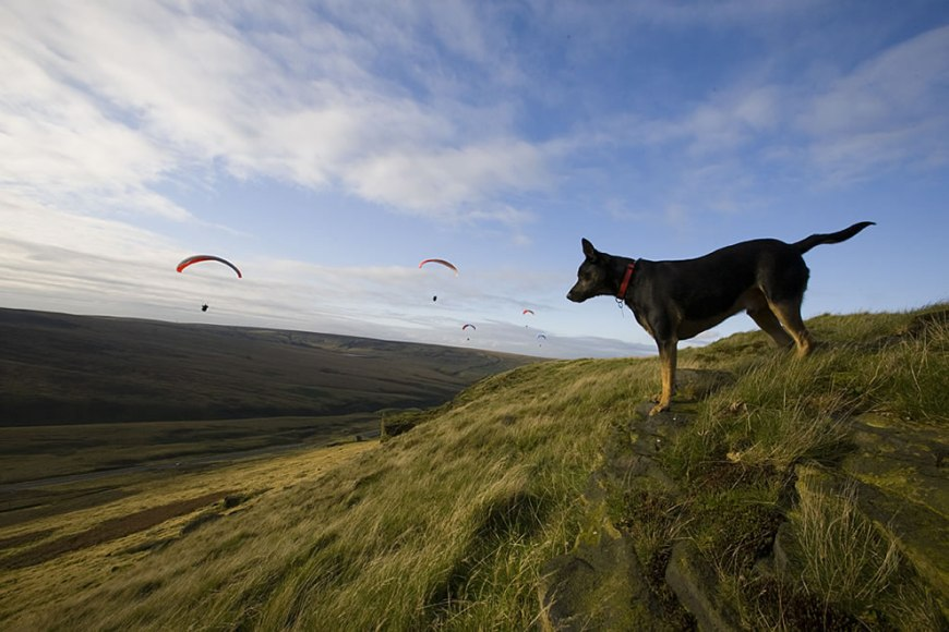 Paragliding, Dog Tod watching on Pule hill England