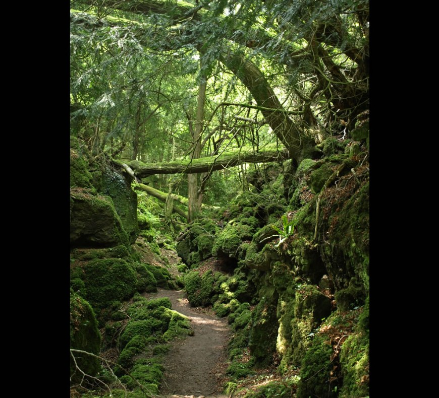puzzlewood path, enchanted forest