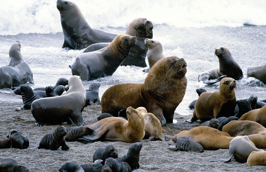 Sea Lions on Galapagos Islands