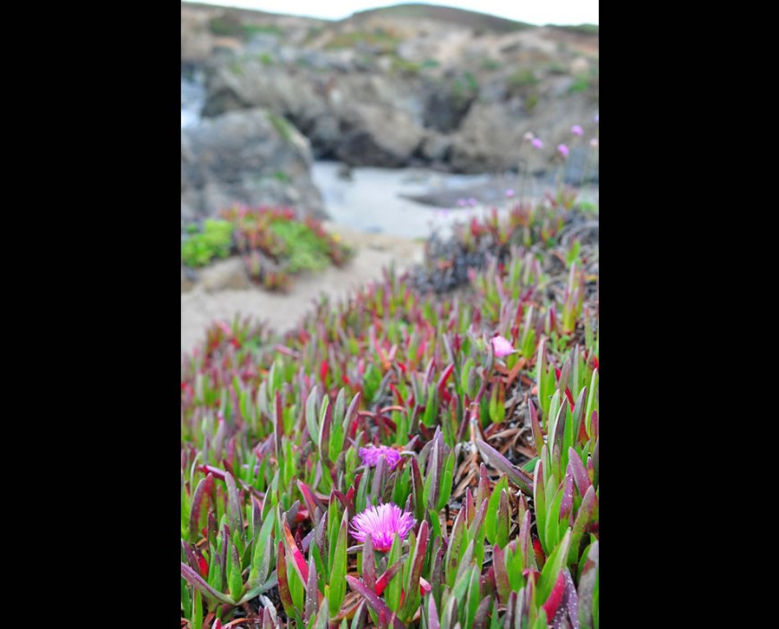 flowers at glass beach