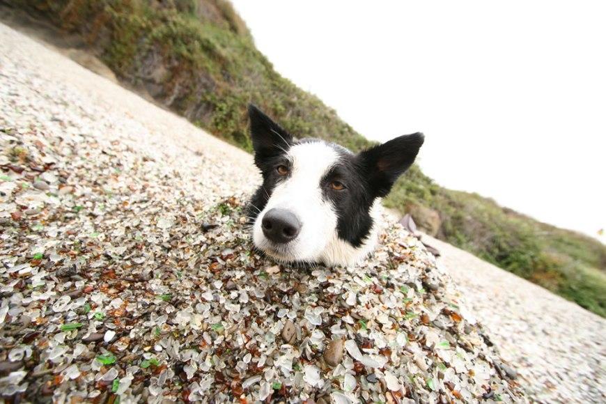Good dog Cali at Glass Beach
