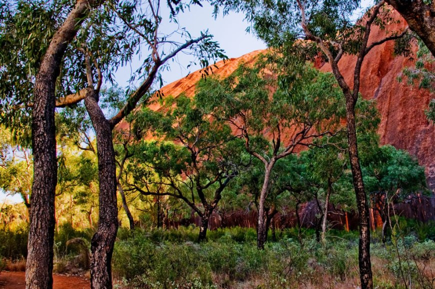 Trees and brush at the base of Uluru in Australia