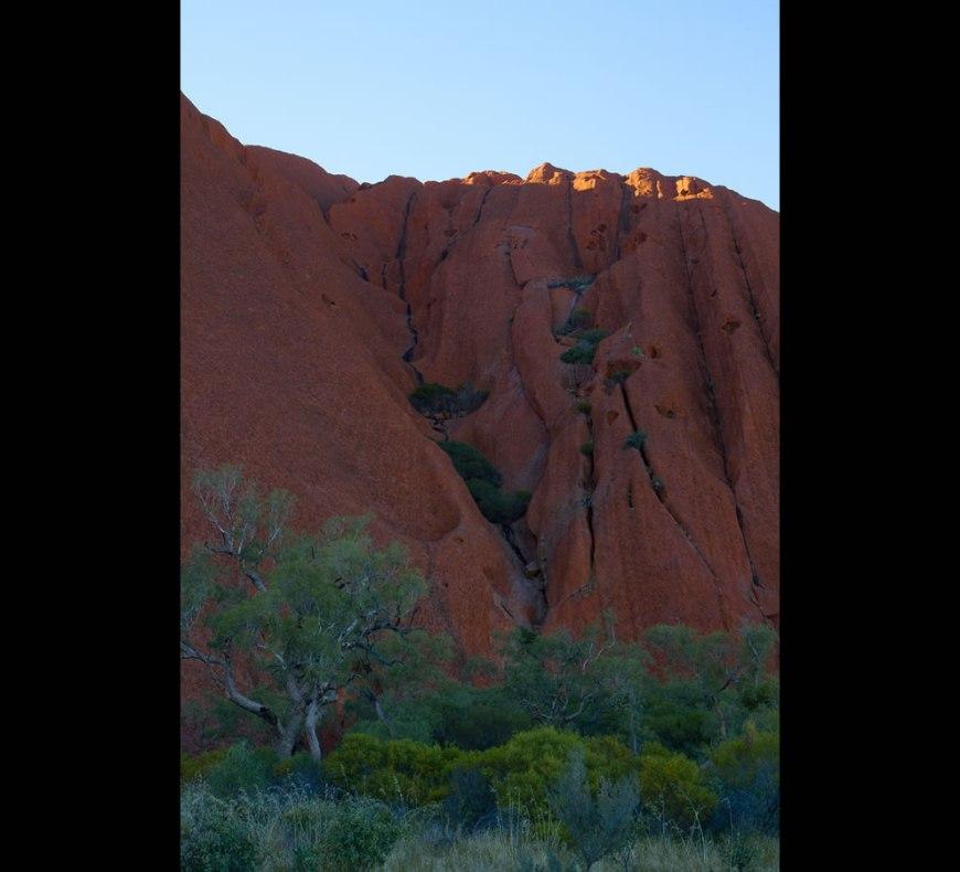 Uluru Foliage