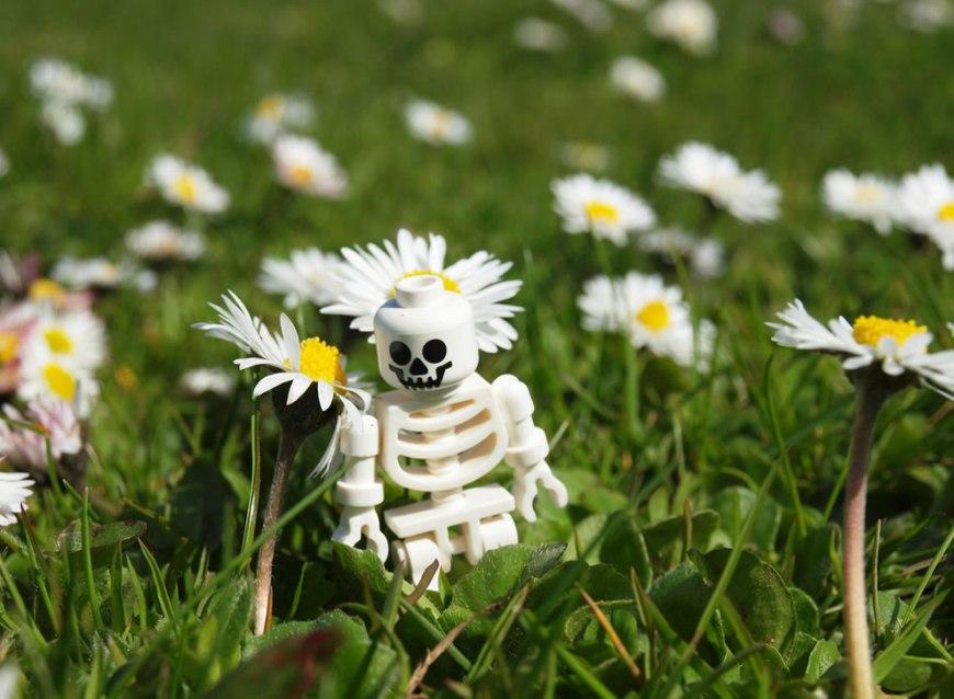 anti-halloween amongst the flowers