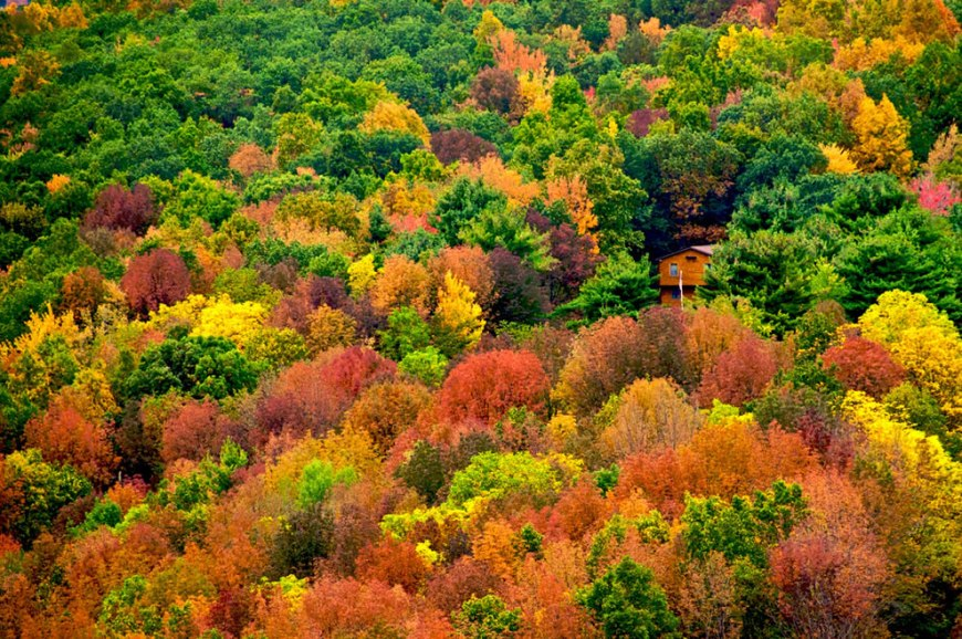 Autumn (fall) colors in September in the US Appalachian Mountains
