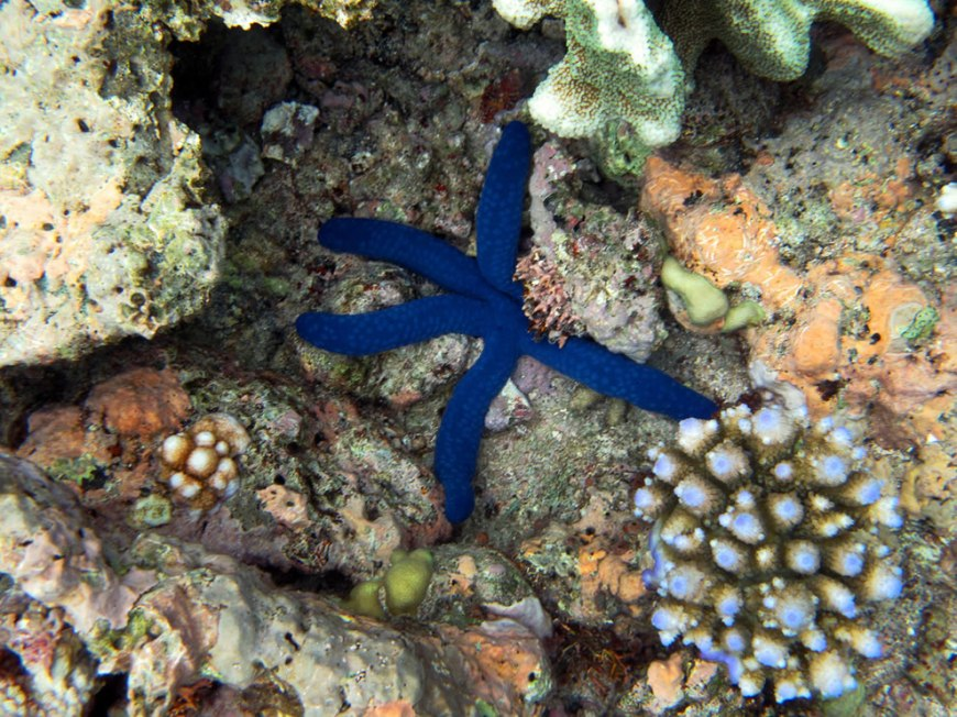 Brilliant stars at the bottom of the sea...Great Barrier Reef
