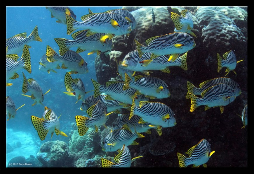 Diving among the coral and fish