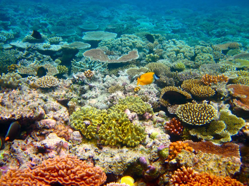 Diving the colorful Great Barrier Reef