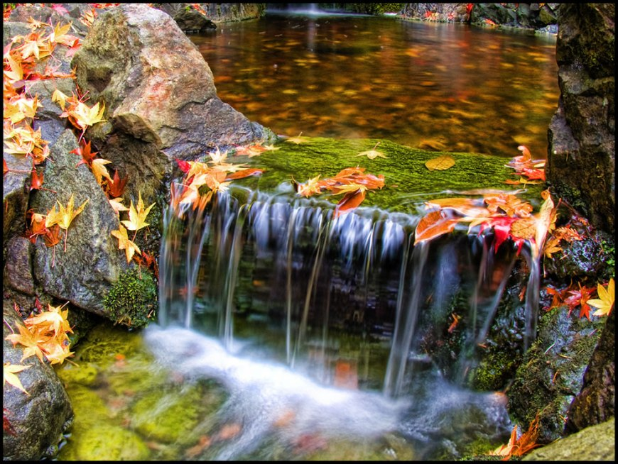 Japanese Garden in Victoria, British Columbia, autumn leaves at Butchart Gardens