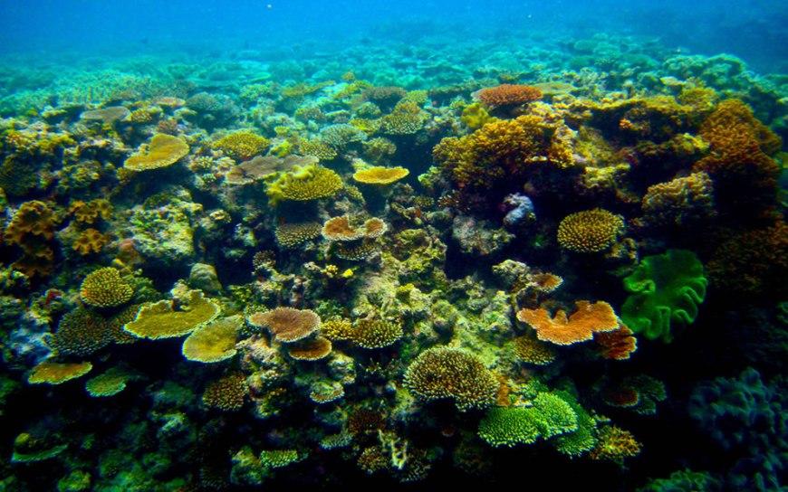 Port Douglas, The Great Barrier Reef, Australia