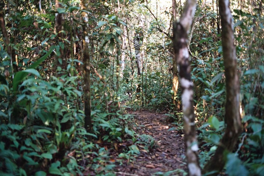 walking through paths in the amazonian rainforest