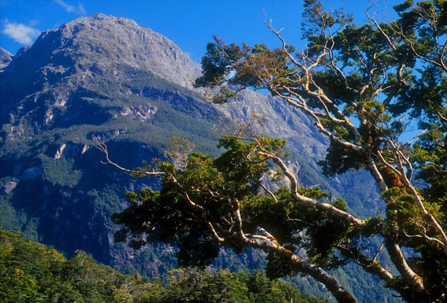 Sheerdown Peak near the end of the Milford Track, The South Island, New Zealand