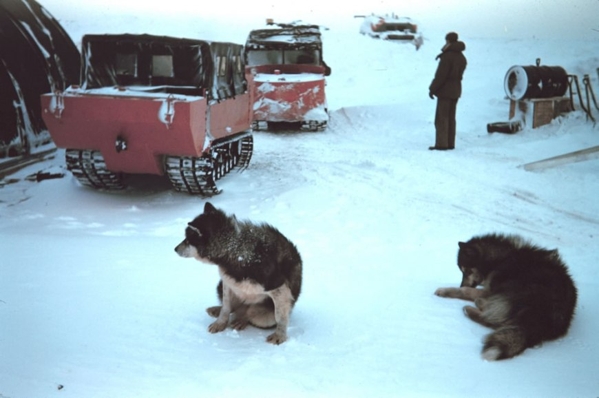 Arctic, Even the dogs thought it was cold 1949