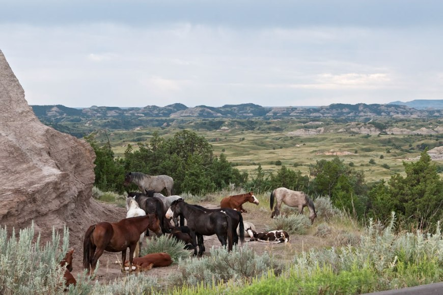 Horses at Theodore Roosevelt National Park
