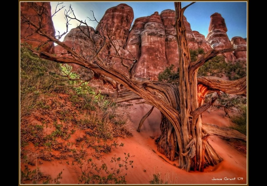 Moab, Utah, landscape. Lone tree at Arches National Park