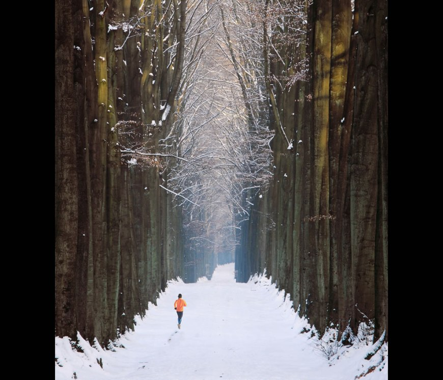 Post Apocalypse -- Running in the Cathedral -- Somewhere in the 'Forêt de Soignes', close to Brussels, Belgium, on a snowy afternoon