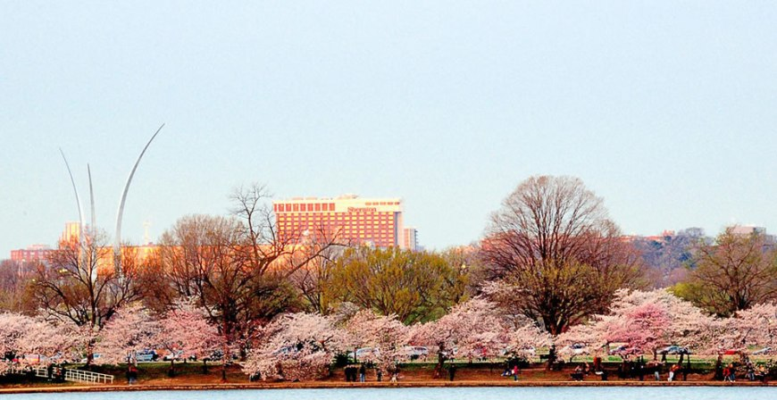 Air Force Memorial and Cherry Blossoms DC