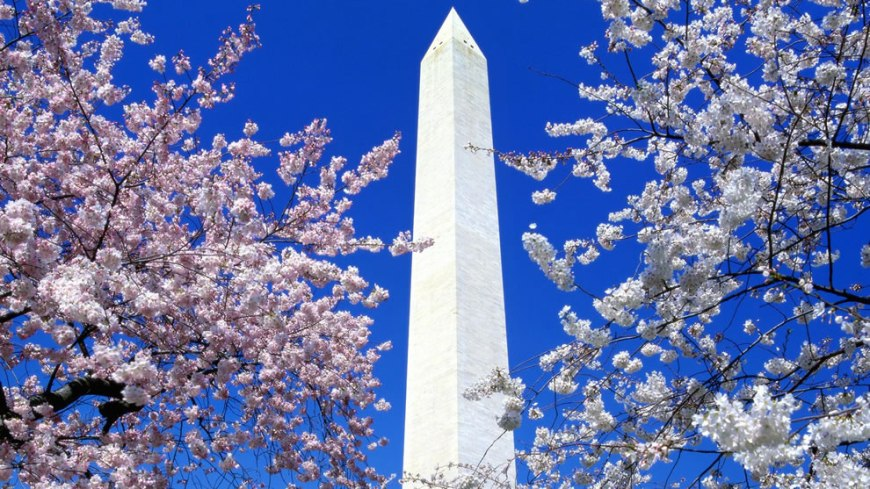 DC architecture framed by blossoming nature