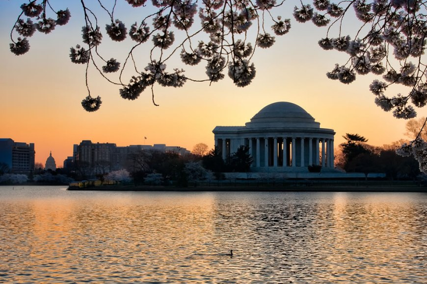 DC in a Single Shot Jefferson Memorial, Capitol Building, Cherry Blossoms, Tidal Basin and even a diving bird in the foreground, all captured at sunrise
