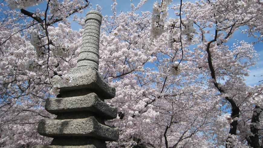Japanese Pagoda in DC during Cherry Blossom Fesitval