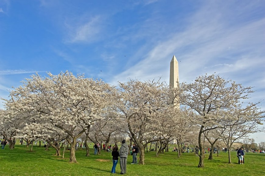 National Mall Kite Flying Washington Monument Cherry Blossoms
