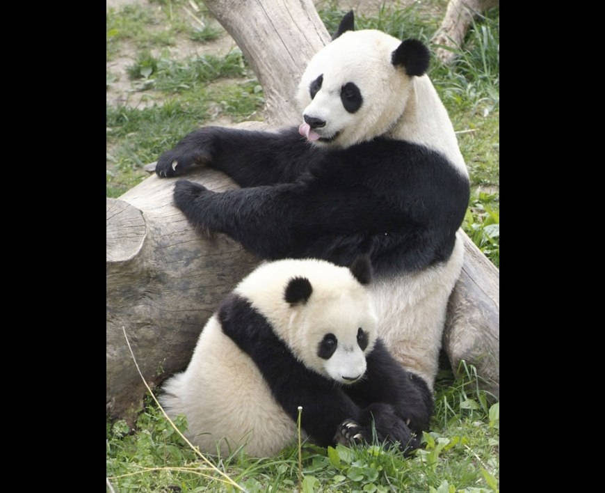 Momma and baby at UNESCO World Heritage Site, Sanctuary in China