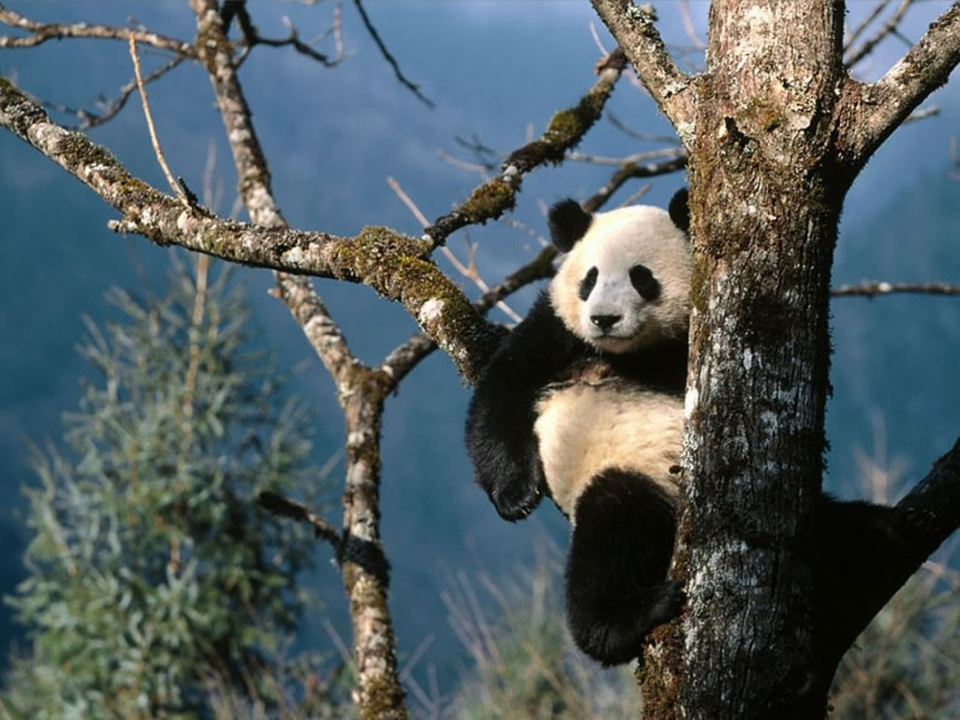Natural Recliner Giant Panda