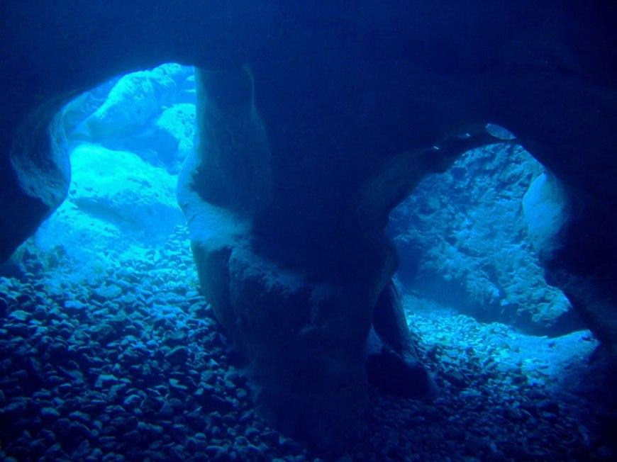 Diving Vortex Springs