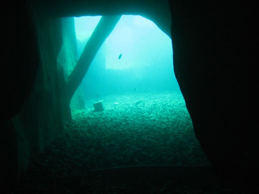 From inside the man-made 'cave' at Vortex Spring