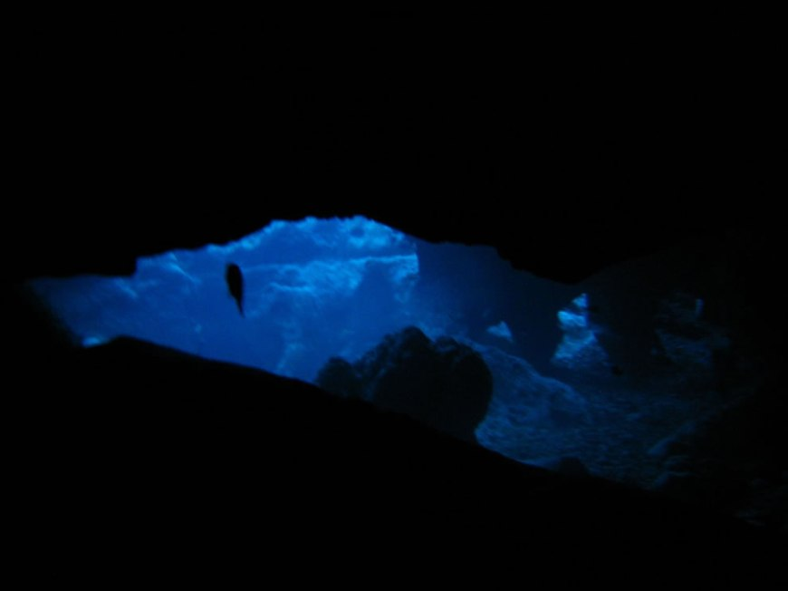 Peering up from the cave entrance to the cavern (twilight dive)
