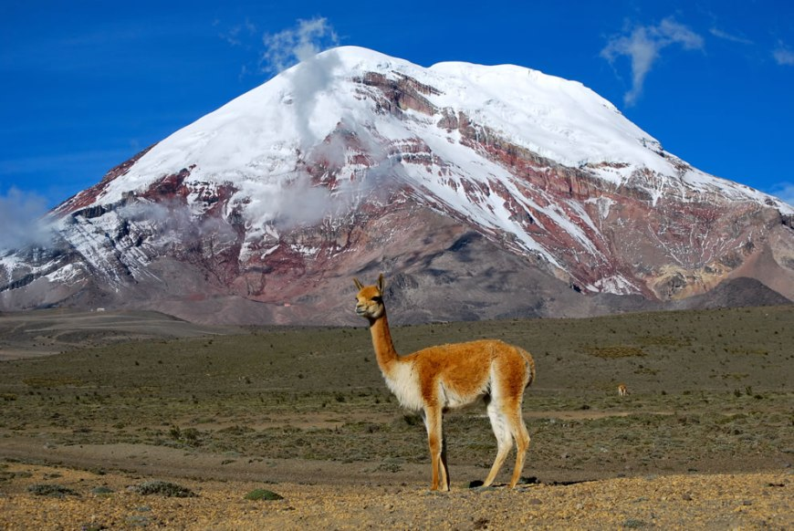 World Photography Day celebrated by Wikimedia Commons Picture of the Year winners for 2011 -- #8 – 35 votes in Final; Vicuña, one of two wild South American camelids. In the background the point on the Earth's surface that is farthest from the Earth's center, Chimborazo volcano - Ecuador